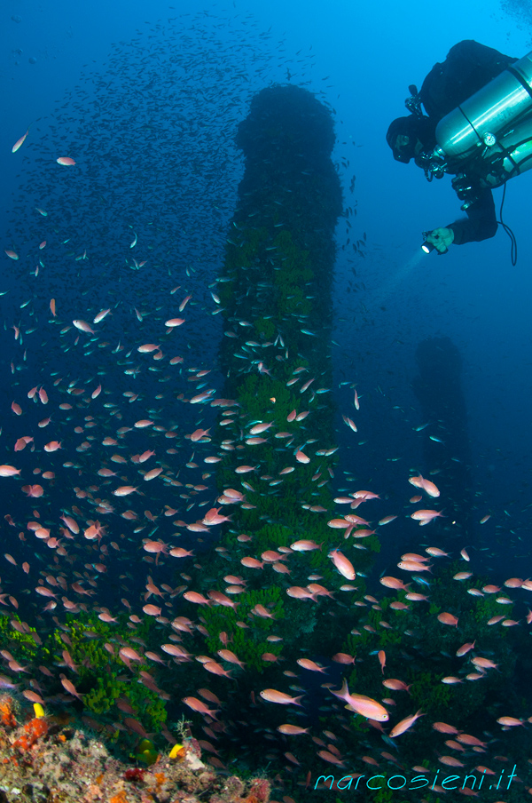 Caterina Madre wreck with Costa del Sud diving