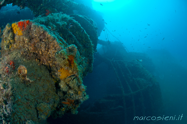 Paguro Wreck end july 2016
