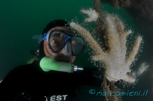 Me and Paguro soft coral
