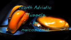 North Adriatic Mussels